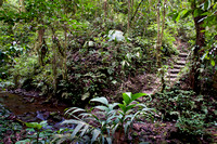The Jungle Trail at Arenal Lodge near Arenal Volcano, Costa Rica